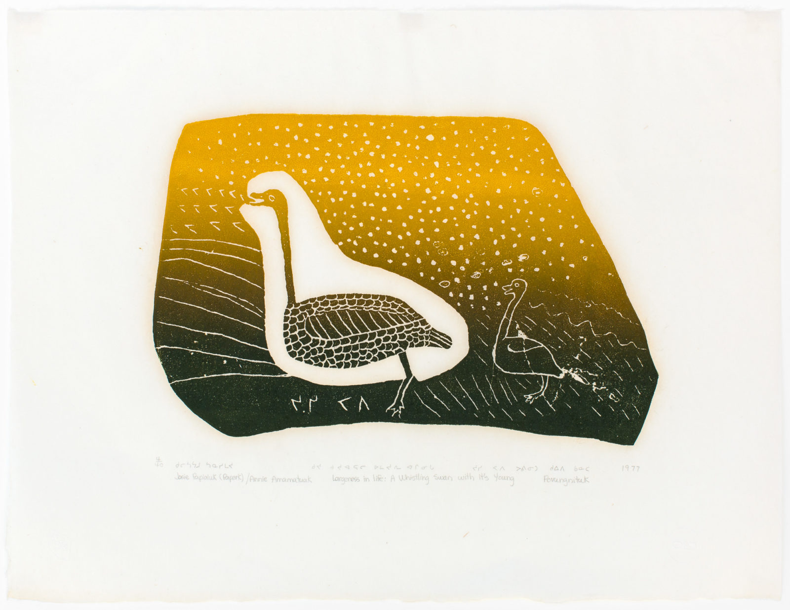 Josie Pamiutu Papialuk  - Largeness In Life: A whistling Swan With It's Young,