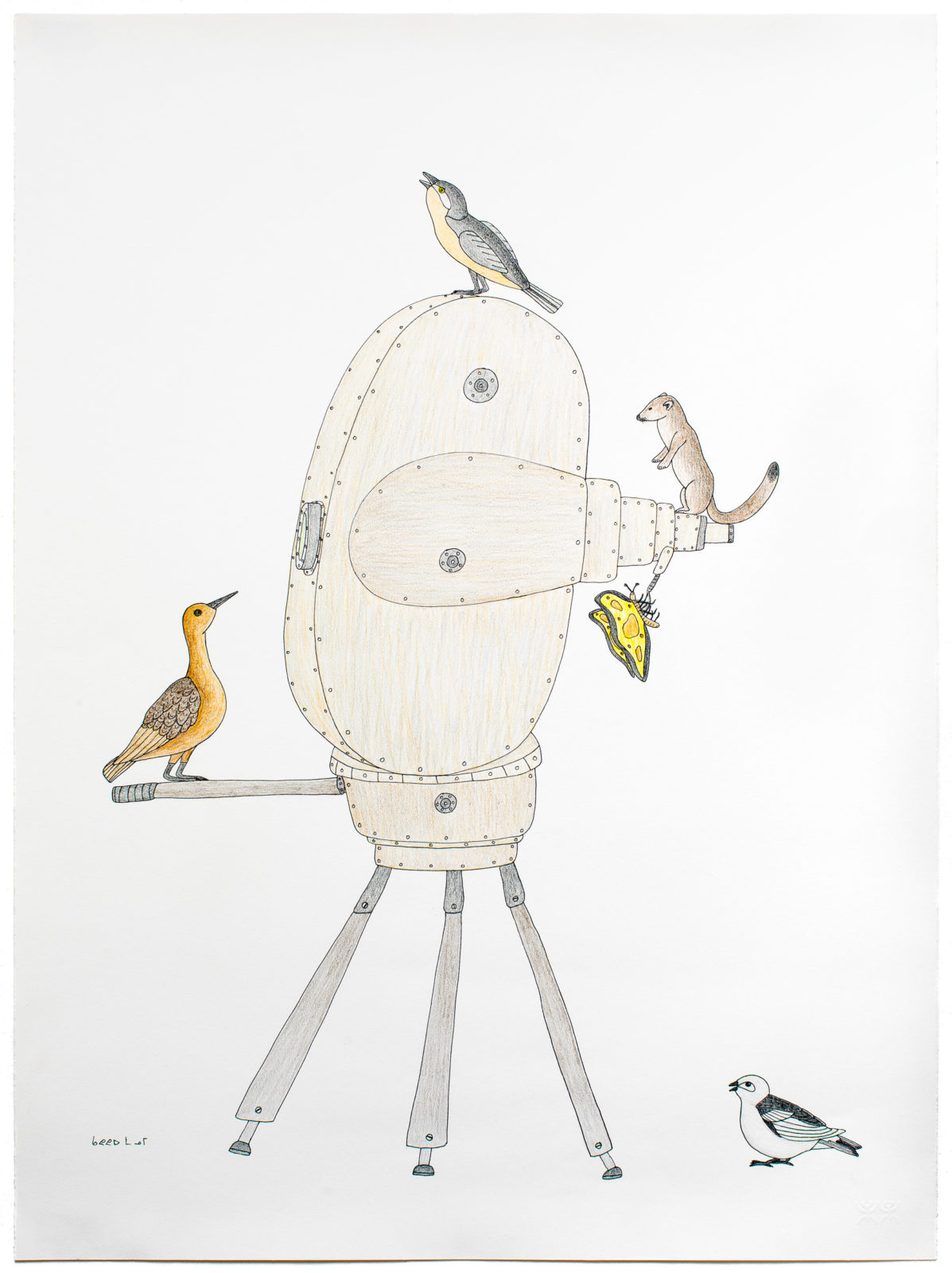 Qavavau Manumie - untitled (animals inspect camera)