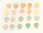 Sheojuk Etidlooie - untitled (seashells)