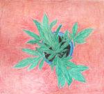 Jutai Toonoo - Marijuana